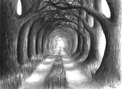 Dirt Drawing - Oak Tree Lane by Adam Vereecke