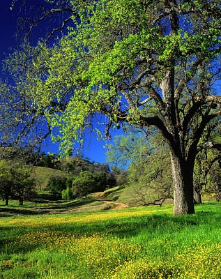 Oak Trees And Wildflowers Cover Print by John Alves