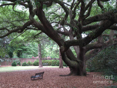 Angel Oak Photograph - Oak Trees - Hopeland Gardens - Aiken South Carolina by Kathy Fornal