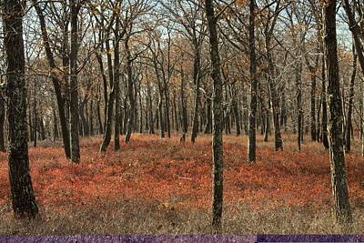 Oak Woodland In Autumn Print by Science Photo Library