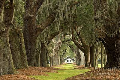 Georgia Plantation Photograph - Oaks Of The Golden Isles by Adam Jewell