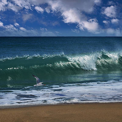 Flying Seagull Photograph - Ocean Blue Morning by Laura Fasulo