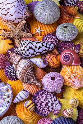 Spiral Photograph - Ocean Treasures by Garry Gay