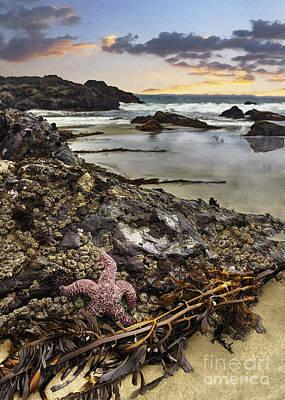 Santa Monica Digital Art - Ocean's Treasures by Sharon Foster