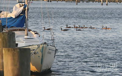 Ocracoke Boats And Birds Print by Cathy Lindsey
