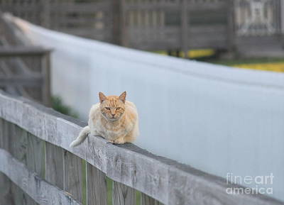 House Photograph - Ocracoke Light Cat by Cathy Lindsey