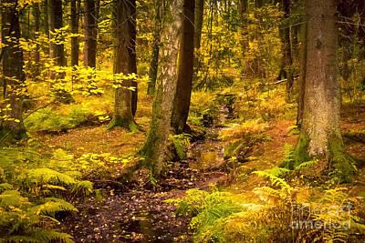 October Forest Print by Lutz Baar