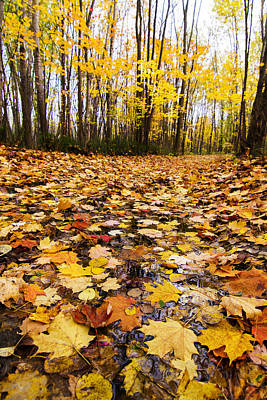 Laval Photograph - October Maple Forest by Mircea Costina Photography