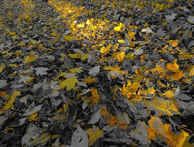 Forest Floor Photograph - October Morning by Dan Sproul