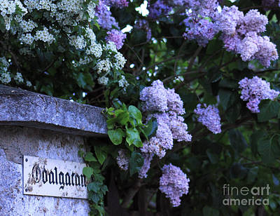 Marbles Photograph - Odalgatan Lilacs by Alison Gunn