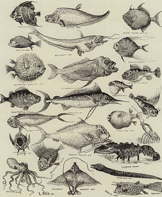 Taxonomy Drawing - Odd Fish At The International Fisheries Exhibition by Louis Wain