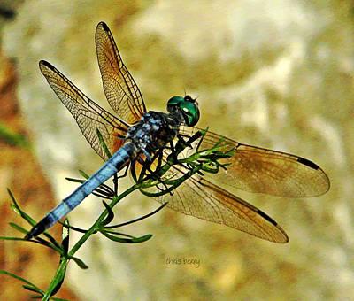 Odonata  Print by Chris Berry