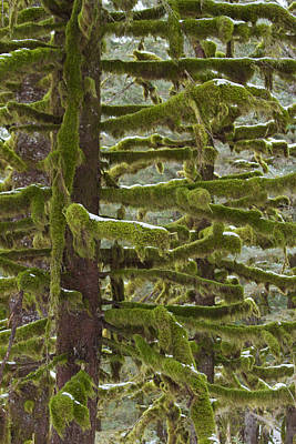 Of Moss And Snow Print by Tim Grams
