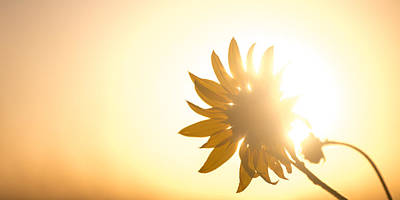 Sunsets Photograph - Of Sun And Flowers by Peter Tellone