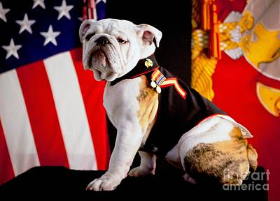 Pd Photograph - Official Mascot Of The Marine Corps by Pg Reproductions