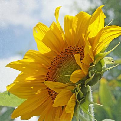 Garden Flowers Photograph - Oh Happy Day by Kim Hojnacki