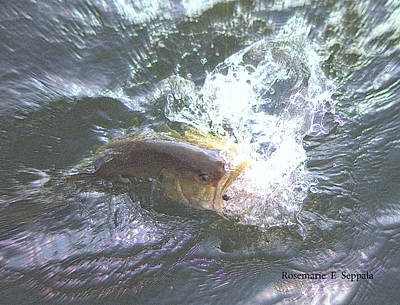 Large Mouth Bass Digital Art - Sport Fishing.....  Big Bass Action by Rosemarie E Seppala
