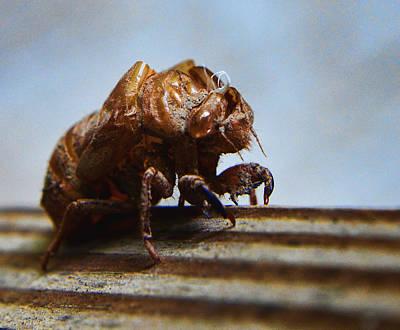 Cicada Photograph - Oh Shell No by Jeffrey Platt