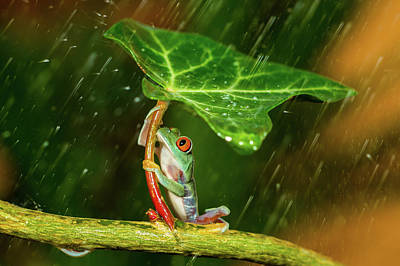 Tree Frog Photograph - Ohh Noo :( It's Raining by Kutub Uddin
