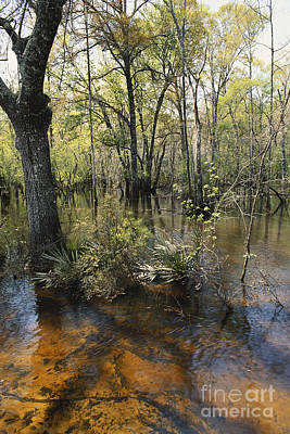 Bottomlands Photograph - Ohoopee River, Georgia by William H. Mullins