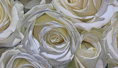 Painting - White Roses by Thomas Darnell