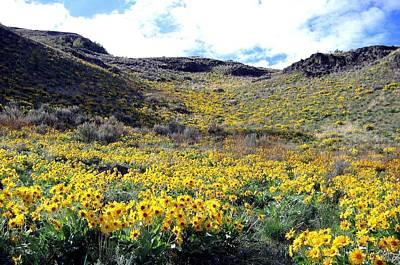 Okanagan Valley Sunflowers 1 Print by Will Borden