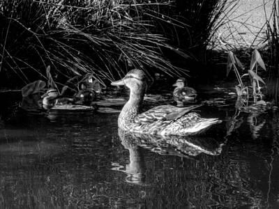 Okc Ducks 002 Print by Lance Vaughn