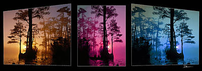 Ericamaxine Photograph - Okefenokee Swamptriptych-featured In Nature Wildlife-nature Photography-and Cards For All Occasions by EricaMaxine  Price