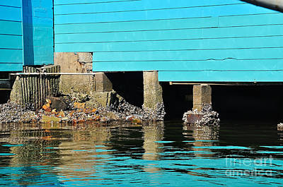 Old Aqua Boat Shed With Aqua Reflections Print by Kaye Menner