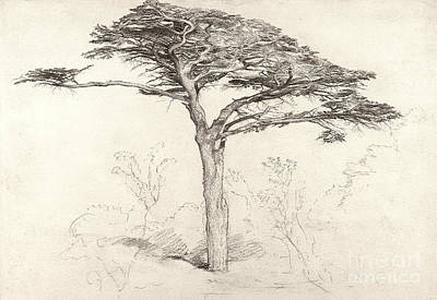 Ancient Drawing - Old Cedar Tree In Botanic Garden Chelsea by Samuel Palmer