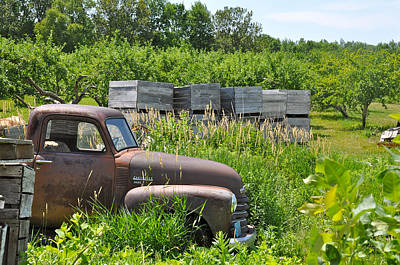 Old Chevy Pickup In Orchard Print by Jeremy Evensen