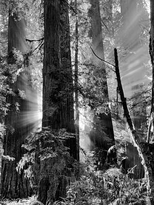 Old Growth Forest Light Black And White Print by Leland D Howard