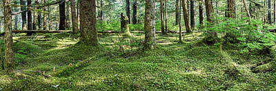 Old Growth Forest, Tongass National Print by Panoramic Images
