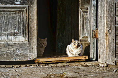 Old Knox Church Cats Print by Nikolyn McDonald