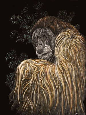 Orangutan Drawing - Old Man Of The Forest by Heather Ward