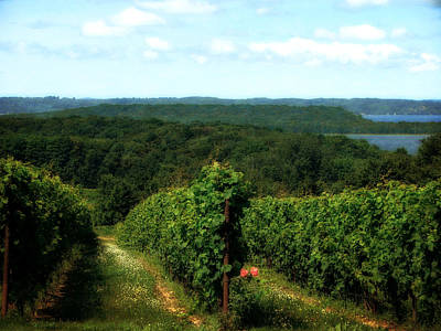 Grapevines Digital Art - Old Mission Peninsula Vineyard 2.0 by Michelle Calkins
