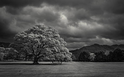Solitude Photograph - The Old Oak And The Crow by Chris Fletcher