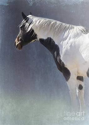 Quarter Horse Digital Art - Old Paint by Betty LaRue