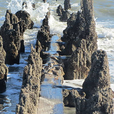 Old Pier Remnants At Folly Beach 4 Print by Cathy Lindsey