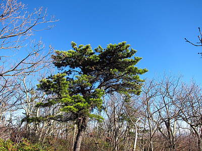 Oldrag Photograph - Old Rag Hiking Trail - 121242 by DC Photographer