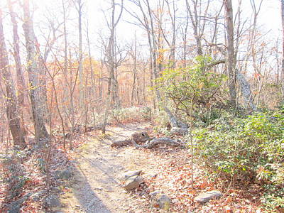 Old Rag Hiking Trail - 121249 Print by DC Photographer