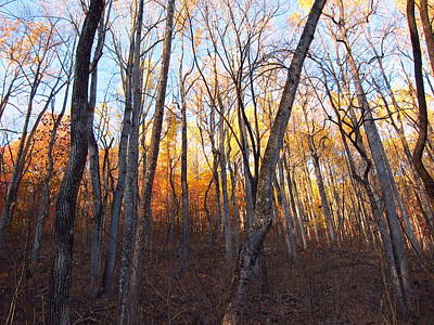 Old Rag Hiking Trail - 121262 Print by DC Photographer
