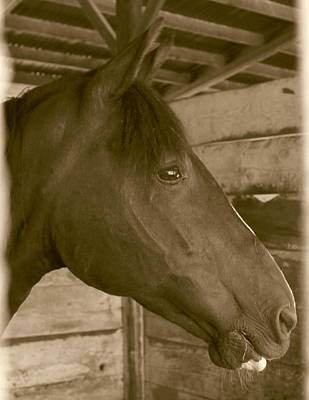 Contemplative Photograph - Old Time Horse Portrait by Angie Vogel