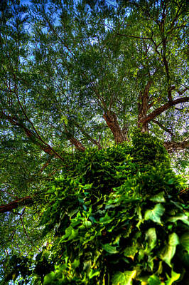Albuquerque Photograph - Old Town Tree Ivy by David Patterson