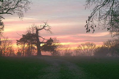 Old Tree At Sunset Print by Brian Harig