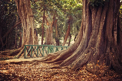 Old Trees In Pamplemousse Garden. Mauritius Print by Jenny Rainbow