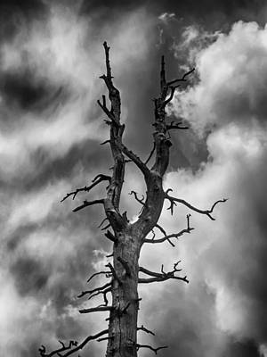 Landscape Photograph - Old Trees Reach For The Sky by John Haldane