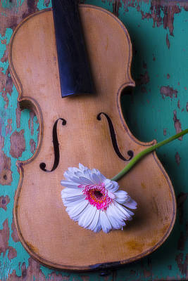 Beaten Up Photograph - Old Violin And White Daisy by Garry Gay