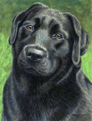 Black Labrador Drawing - Olive by Debbie Stonebraker