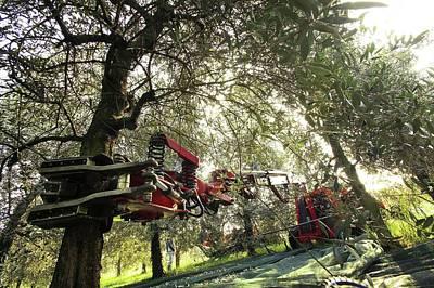 Olive-harvesting Machine Print by Mauro Fermariello